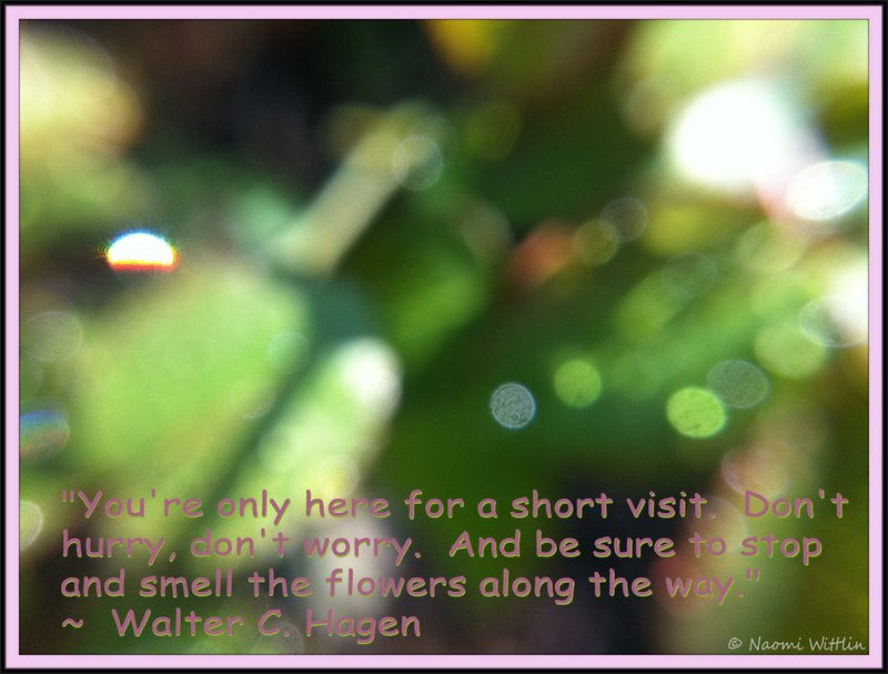 Quotes About Water Drops Quote